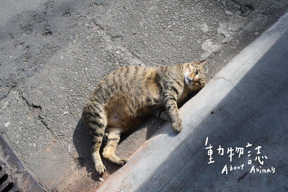 掐死流浪貓「大橘子」的台大兇手再度殘忍虐殺貓咪!監視器拍到他的犯案表情讓網友怒嗆「這種變態惡魔才該死」!