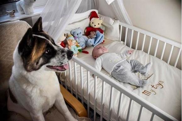 她懷孕20週「狗狗卻一直哭」太詭異 去醫院發現「牠救了自己一命」!