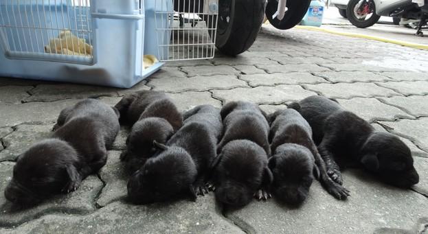 酗酒飼主在狗媽媽面前摔死幼犬,當志工看到狗媽媽對剩下寶寶「死都想要急救」時就全都淚崩了...