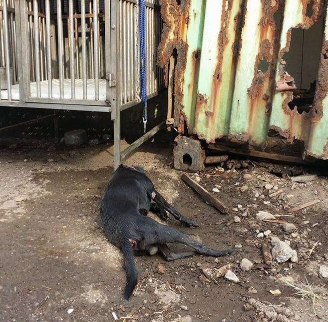 大熱天狗狗被關鐵籠受不了跳出求生,當好人一澆水看到他「身上冒煙」都快氣死了!