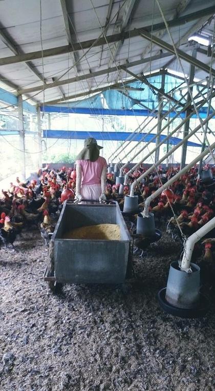 網友曬出這名「在養雞場做粗重工作」女生,本以為會很土但一看到騎重機超美正面就全部戀愛了!