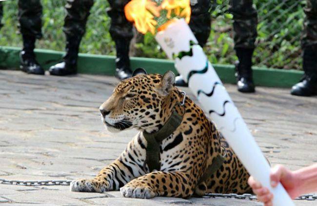 12張照片讓你看見「里約奧運光鮮亮麗背後」的血淋淋慘不忍睹落魄真相,讓你看到人類最空虛的榮耀感!