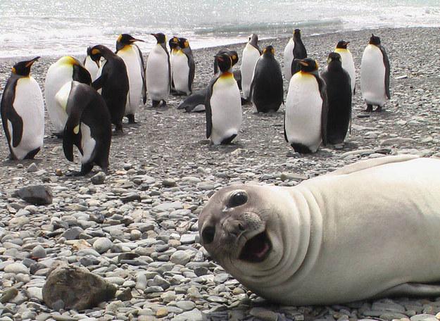 30張證明「動物其實根本就很懂」的最傳奇「可愛動物亂入照」!