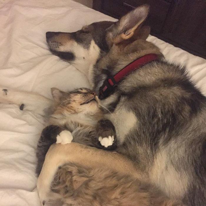 主人決定讓狗狗挑一隻能跟自己一起長大的小貓,最後發現「原來狗狗早就知道了」...