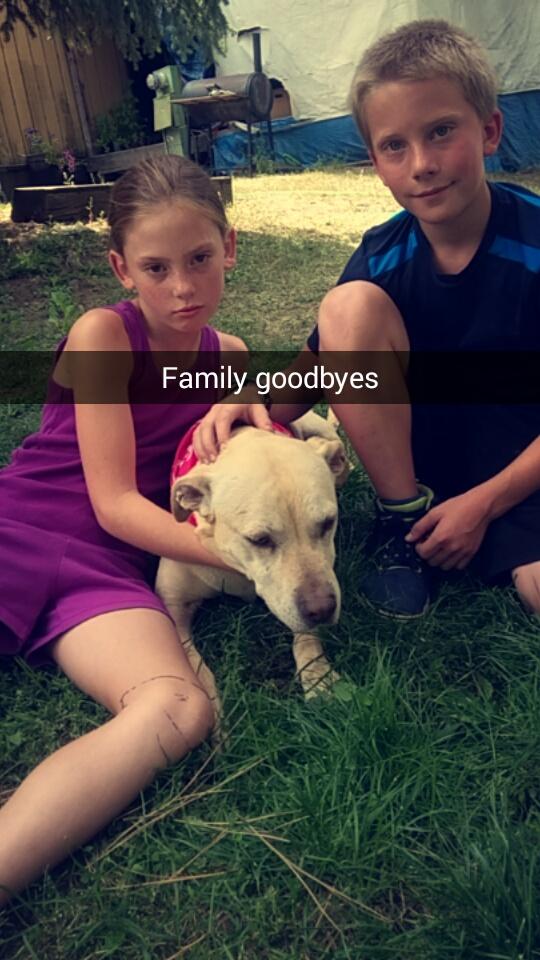 主人紀錄愛犬準備安樂死的「最後一天」全過程,第一張照片就讓我已經哭到看不清螢幕了...(21張)