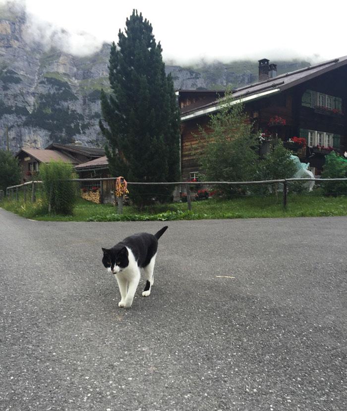 他到瑞士爬山卻不小心迷路了,結果喵仙人就下凡說:「人類,跟著我走吧...」