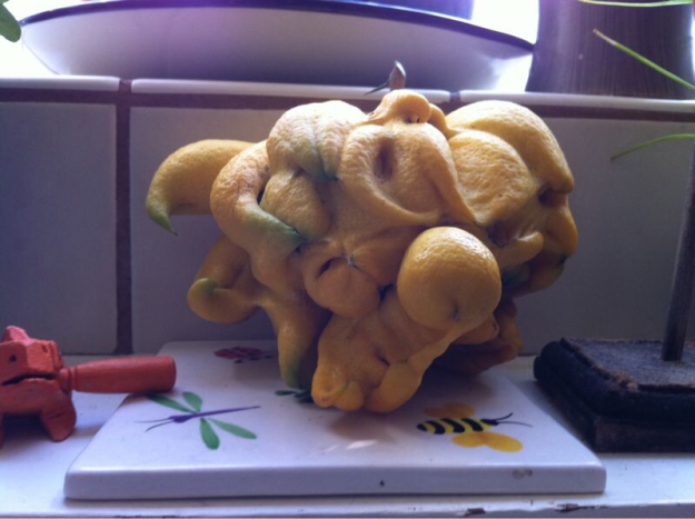 This crazy mutant lemon.