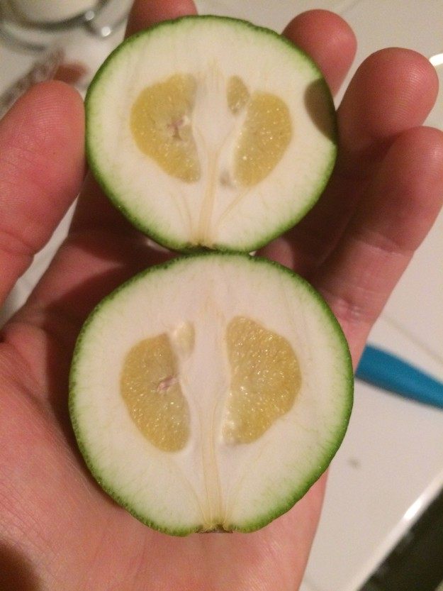 This really messed-up lime.