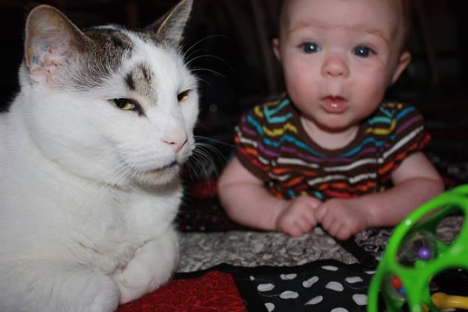 家裡的貓哥哥走失3年後在收容所找到,小女孩看到「哥哥」時小宇宙就徹底爆發大喊「我好想你」!