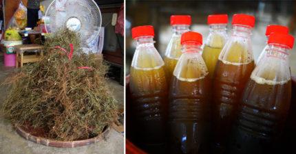 醫學研究證實「台灣這個地方出產的青草茶」可以抗癌,不過先看清楚!