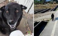 鄉公所誤以為這隻狗狗是「流浪犬」就把他擅自抓回去,結果主人當天趕去所裡才發現「已經變成灰了」...