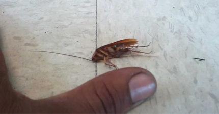 你家其實很乾淨沒食物屑屑但為什麼蟑螂還能存活?其實都是這4個「小強最愛」的東西!和...你的頭髮!