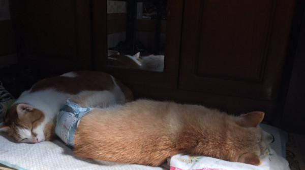 橘貓「超討厭曬太陽」但為了快死去狗狗突然開始喜歡躺陽光下,主人看到就噴淚了...
