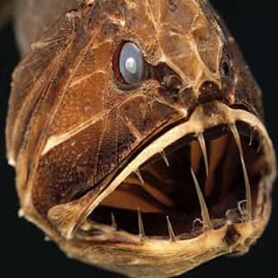 15種看超過3秒就會害你做惡夢的「恐怖奇異生物」。