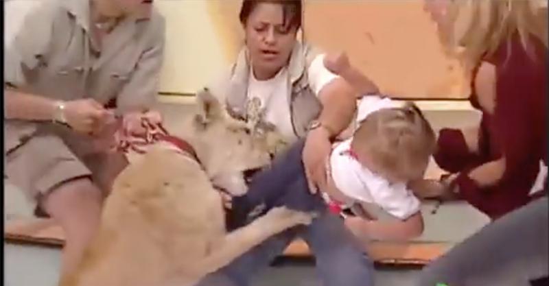 電視節目安排獅子和小女孩一起上節目還以為很有梗,但結果證明這是最致命的行為...