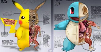 10種神奇寶貝真實解剖學圖畫,小拉達Ratatta的體內也太詭異了...怎麼都是他?!
