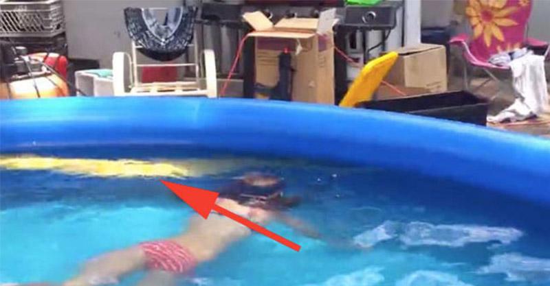 這是小女孩在很開心的游泳影片,但當你發現旁邊那一條不是浮板玩具時「你可能會被嚇到立刻逃回FB」!