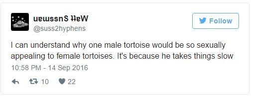 百歲陸龜的種類差點絕種,但因為他「性慾太強」生下800個子女反而成為救國英雄!