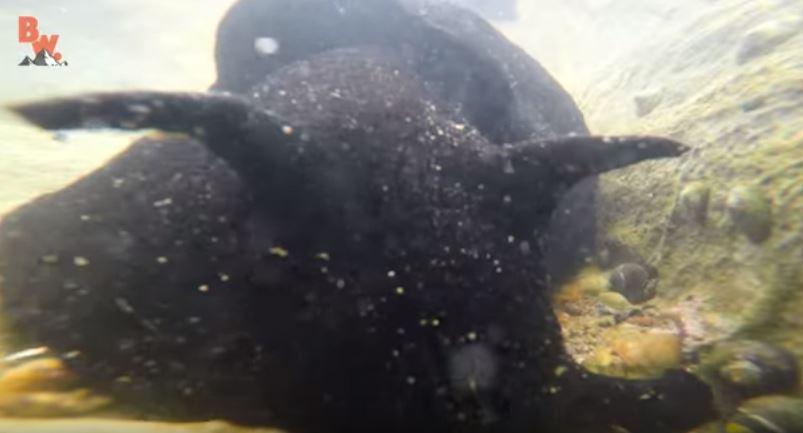 他在潮間帶挖到一隻「又濕又黏的黑色軟趴趴異形生物」,在手上蠕動的恐怖模樣會讓你吃不下飯!(影片)