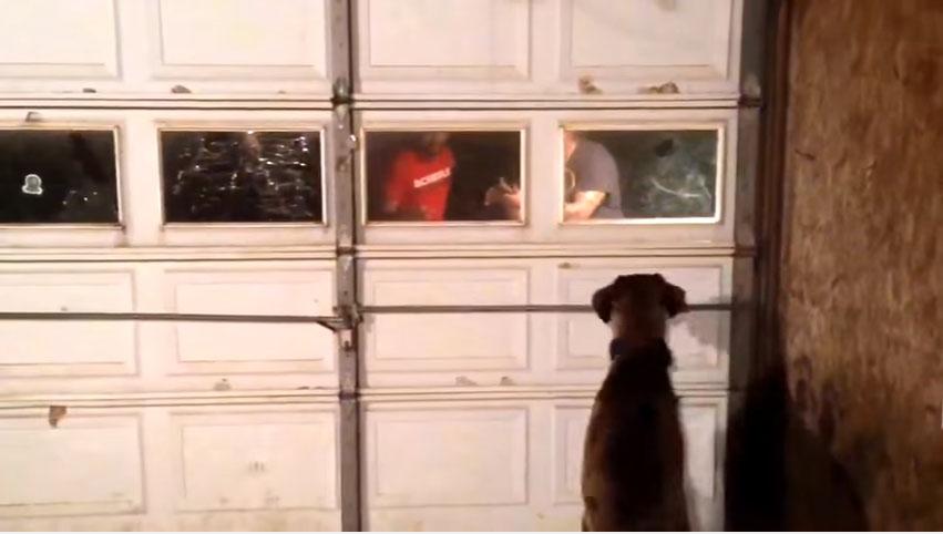 2年多前他的愛犬跑出後院後失蹤,現在他開了560公里「而愛犬相隔只剩一道門」...