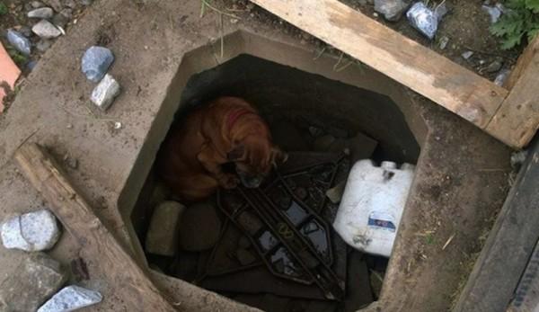 6歲女孩發現這隻狗狗被人惡意囚禁要他活活餓死,「狗狗離開人間時掛著幸福笑容」!