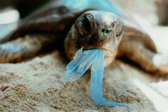 「去角質沐浴產品」殘忍到很快就會被全世界禁止!被害慘的絕對不是只有動物而已!
