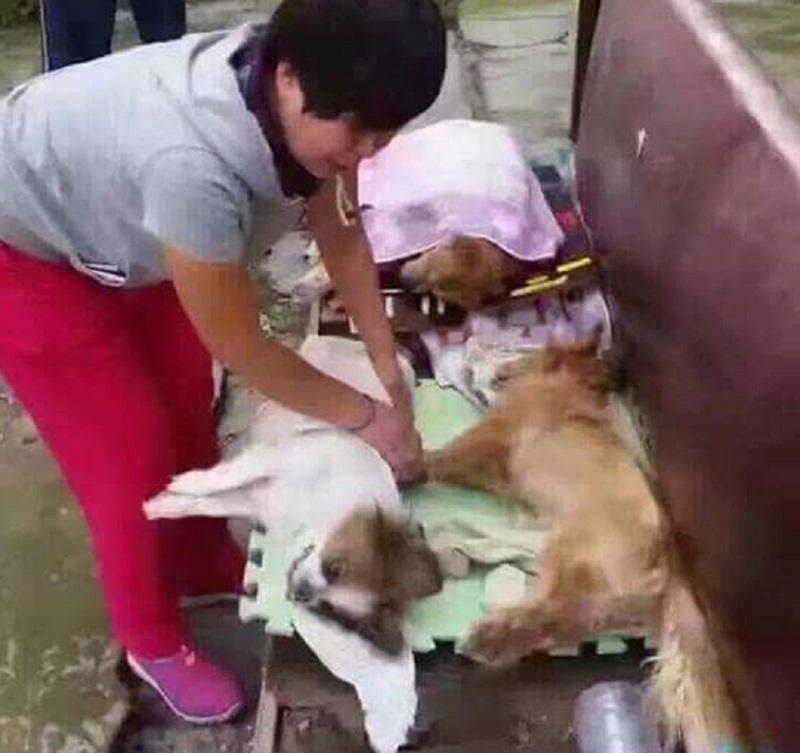 這群無辜狗狗只因「學校要辦活動」被保全狠心全體毒死,照片中阿姨失去家人痛哭讓所有人心都揪成一團了。(有影片)