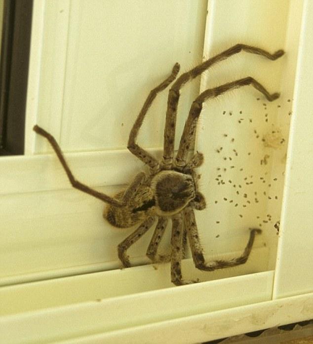 男子回家發現門口有「巨獸擋路」,上網詢問後才發現「絕對不能殺啊」!