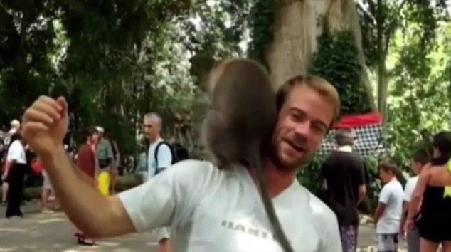 遊客去猴子園參觀站著不動讓朋友拍照,「兩隻猴子一看到完美機會就直接在他頭上開始瘋狂嘿咻」...(影片)