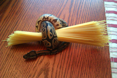 Your pet snake is always tangled up in the stuff.