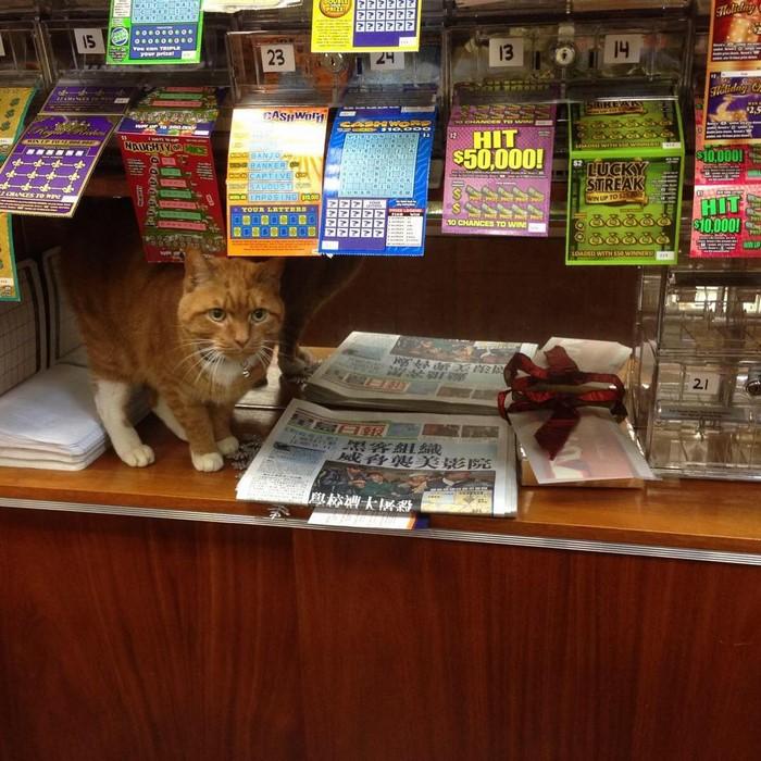 這位「任職9年全年無休」的最萌店員已經征服了所有顧客。「用貓皇姿態叫人奴買東西」的模樣太可愛了啦~