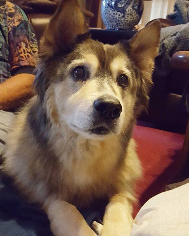她最愛的狗狗快死去而她很希望可以讓他最後一次玩雪,雖然夏天太熱但她還是把「夏天變成冬天了」!