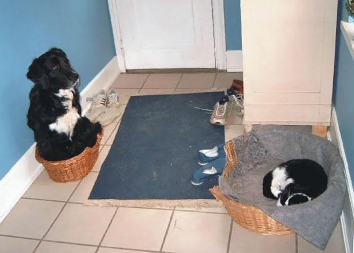 40張「狗狗被貓咪霸凌」照片證明人類不是唯一被貓咪主宰的可憐奴隸生物。