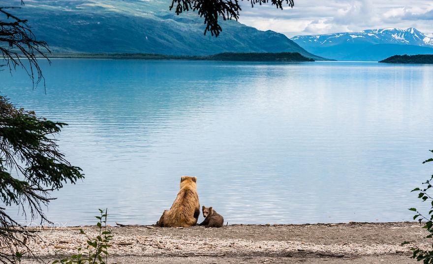 36張「證明熊媽媽跟人類媽媽一樣愛孩子」的超可愛熊熊母子照。