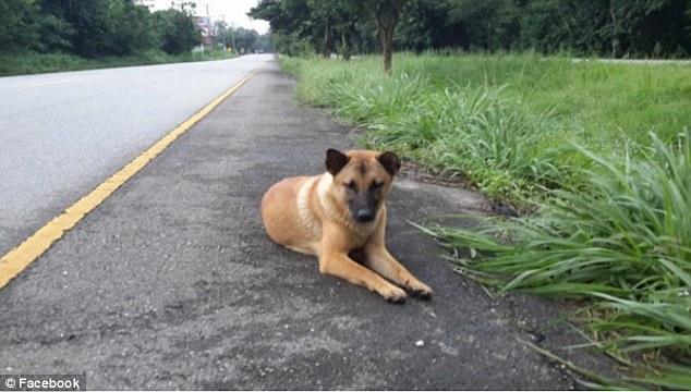 癡情狗狗「公路旁等主人整整一年」不離開也不肯被領養,她終於不用再等讓網友哭到快往生...