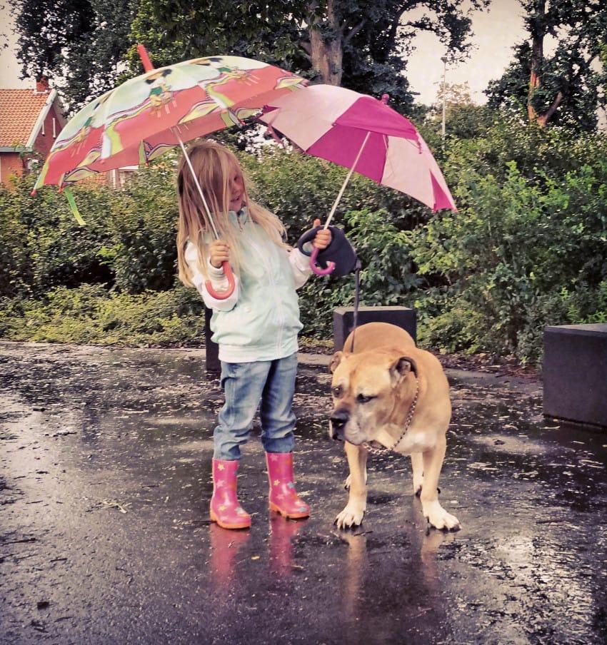 6年前狗狗和小主人「變最要好朋友」吃飯玩樂都分不開,現在「必須說再見畫面」讓大家哭到眼淚鼻涕分不清…