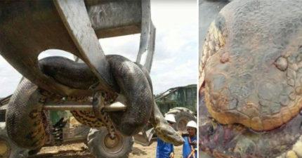 工人爆破山洞驚見「10公尺長神話巨獸」重到必須用怪手才能抬起,走上前仔細一看差點沒嚇到閃尿!