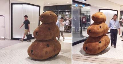 日本網友逛街意外捕捉到「超萌野生水豚君」要下班,「超不科學爆笑走路方式」讓全網路都笑翻了!