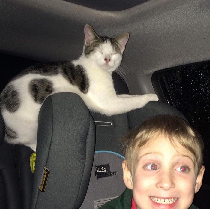這個女生救了「再過幾小時就要被處死」的貓咪一命,結果在回家的路上貓咪就一直用「超萌的方式在說謝謝」。
