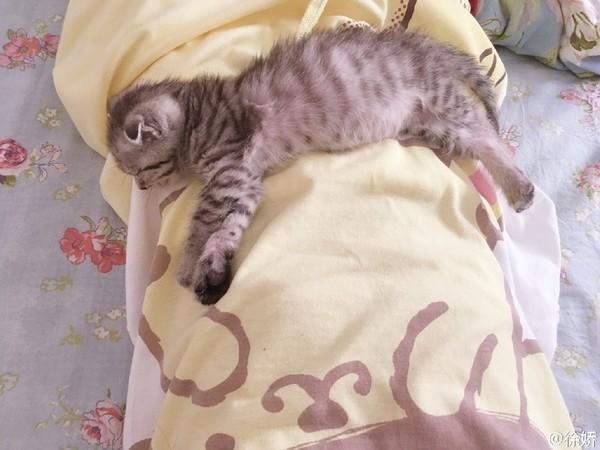 藝人徐嬌分享貓咪趴睡照被網友酸「胸部太平」,她馬上用這張自製圖霸氣反攻到網友改口說「萌妹都平胸」!