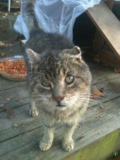 這隻貓咪「被大家警告不能碰」 男子不聽勸「抱起後」超心碎!