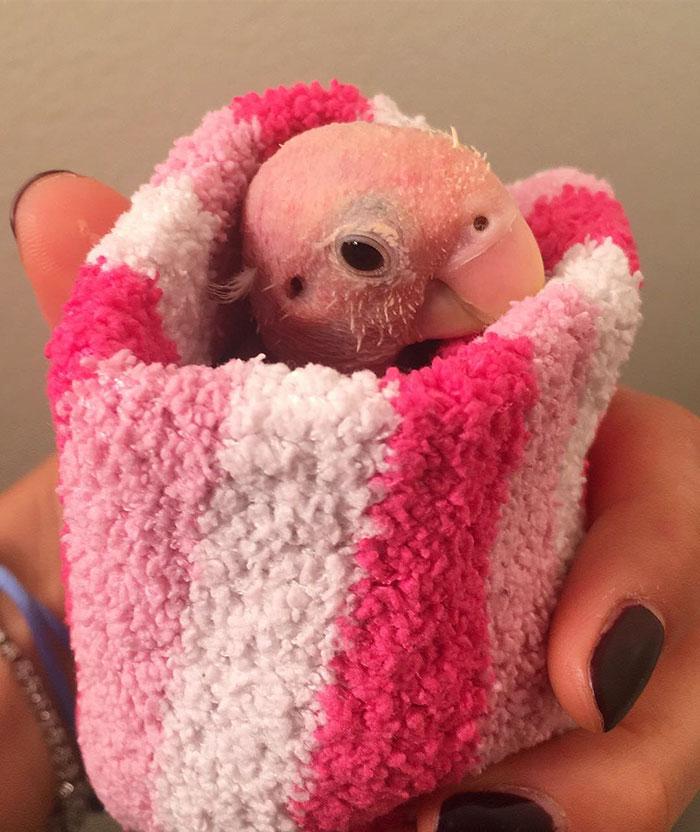 這隻「天生光溜溜的鸚鵡」醜到沒人想要,但一穿上「特製迷你毛衣」就萌到超犯規的啦!