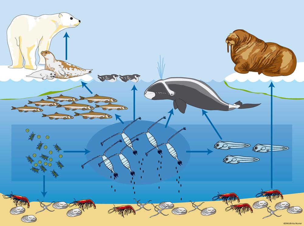 數據清楚顯示「人類回不去了」!二氧化碳濃度破百萬年紀錄,氣候劇變「台灣這些城市」將被海水淹沒!