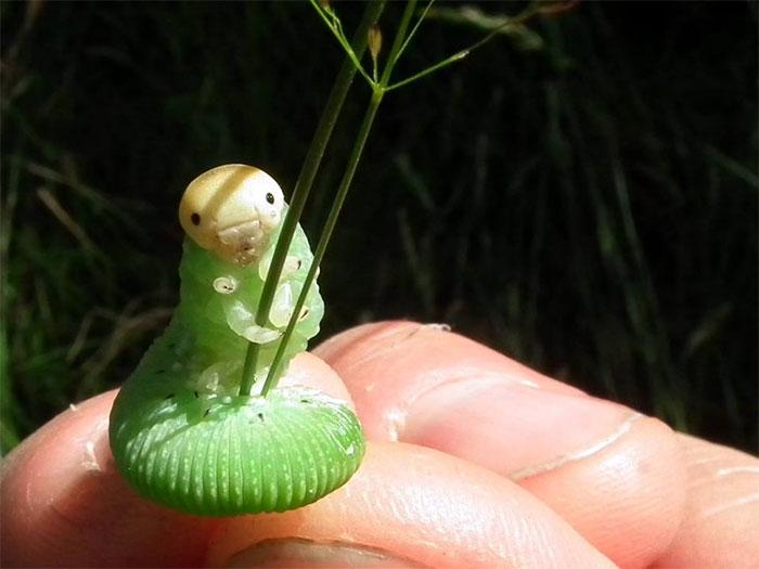 這可愛毛毛蟲抓草的照片不小心太有梗,爆笑的「P圖激烈大賽」就這樣展開!