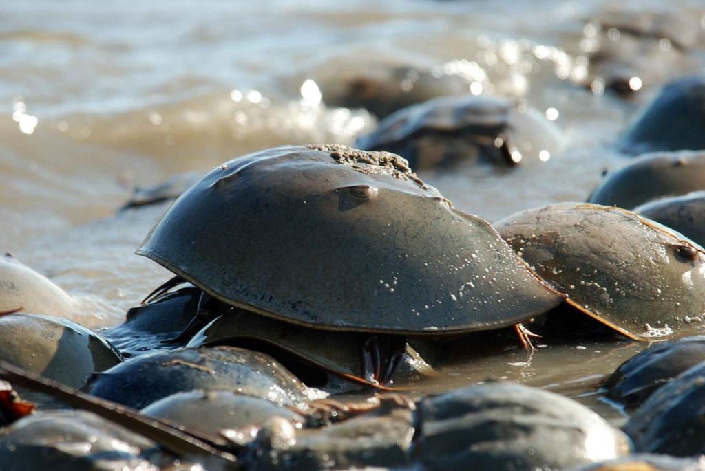500多隻「瀕臨絕種的活化石屍體」離奇出現在日本海灘上,科學家一解剝「人類真的快把地球摧毀了」!