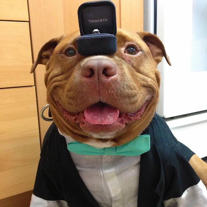 這隻「殺手級」鬥牛犬自從被領養後就11年笑得停不下來!現在40萬人的心已經被他A走了!