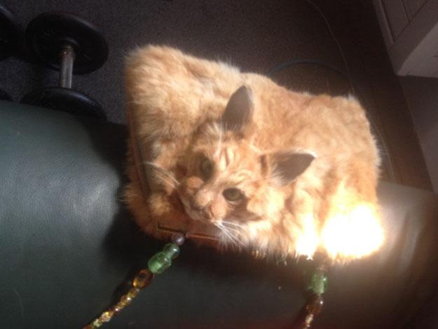 網友看到網上賣的這個「貓皮包」都還以為是假的,藝術家透露恐怖真相讓沒人敢買!