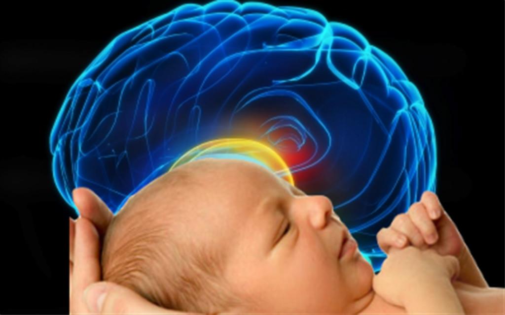 驚人研究指出:如果你的腦袋比別人大的話,那你就真的比別人聰明!