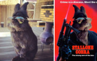 主人不小心幫兔兔戴上太陽眼鏡變得太帥,二次P圖大戰一觸即發(30張)!《動物方城市》那張超可愛!