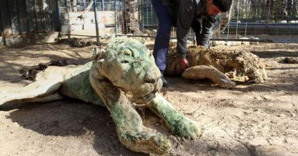 全世界最悲慘的動物園!獅子鱷魚全「風化成乾」 孩子樂園變淒涼龐貝城...
